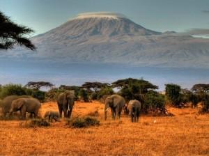Туры и отдых на Занзибаре