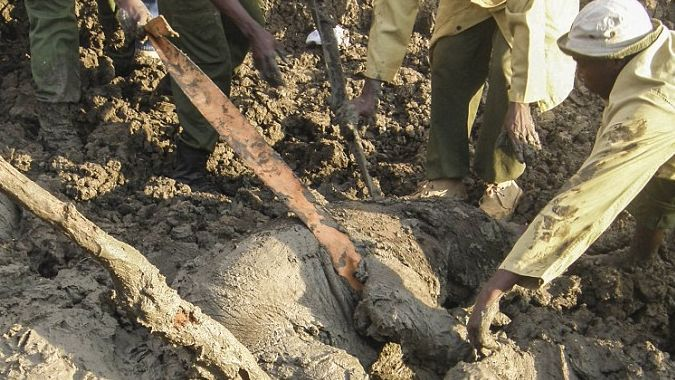 Туристы провели спасательную операцию по спасению кенийского слоненка