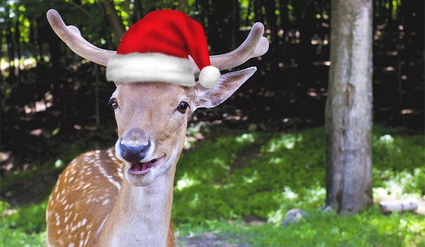 Уже можно собираться в гости к Санта-Клаусу