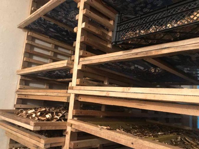 Первую тонну белых грибов насушили два грибника на Прикарпатье