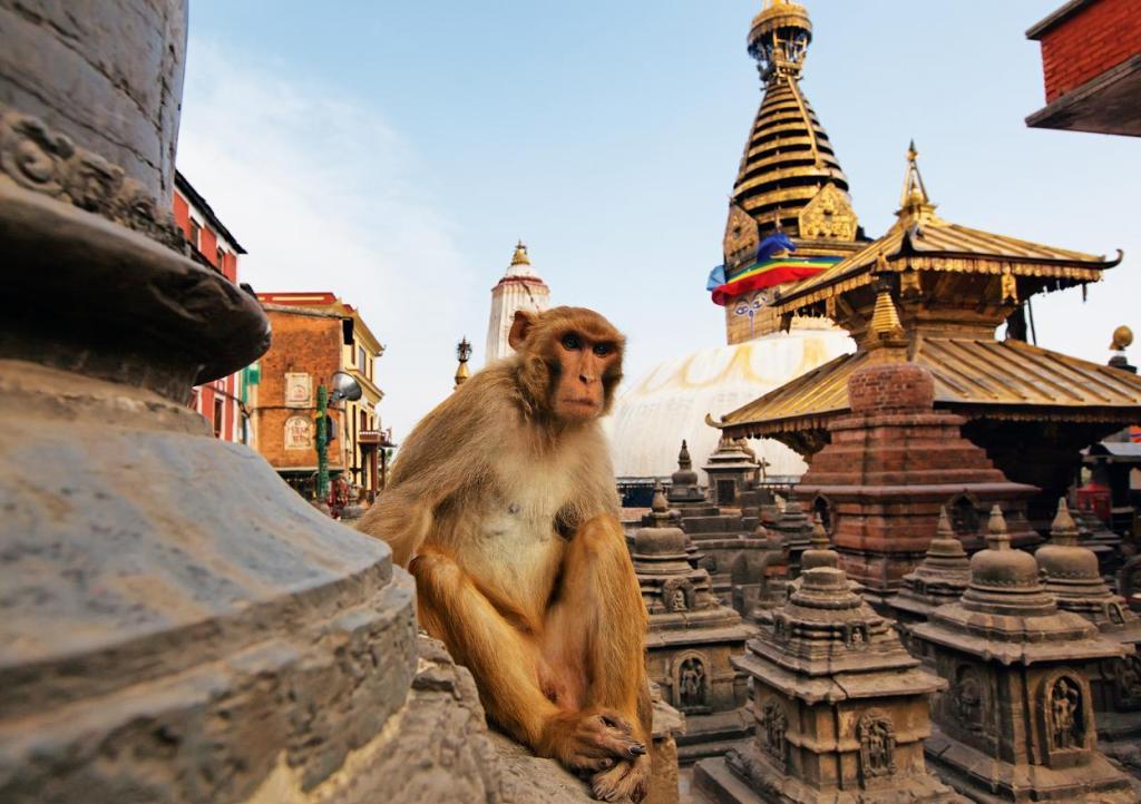 Гималайские открытия: Непал и Бутан