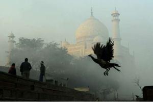 Власти Индии не желают видеть туристов у Тадж-Махала