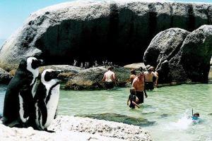 Пляжи, где можно встретить обезьян, оленей, кроликов, и пингвинов