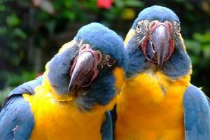 Туристы выбрали лучшие зоопарки мира