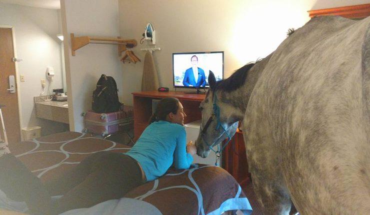 Берейтор шутки ради поселила в отель лошадь