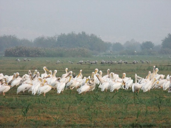 Международный фестиваль птиц в долине Хула пройдет в конце ноября