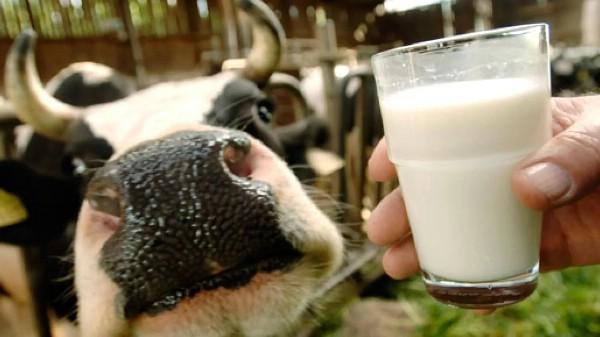 Фестиваль молока впервые пройдет в Калуге