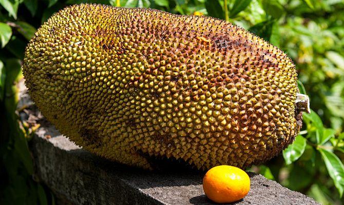 Как люди реагируют на самый зловонный фрукт на Земле