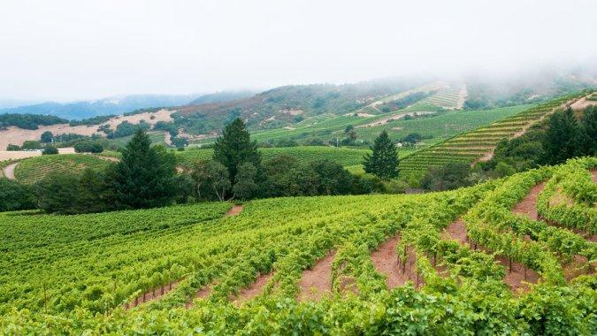 Открыт самый короткий перелет в страну вина