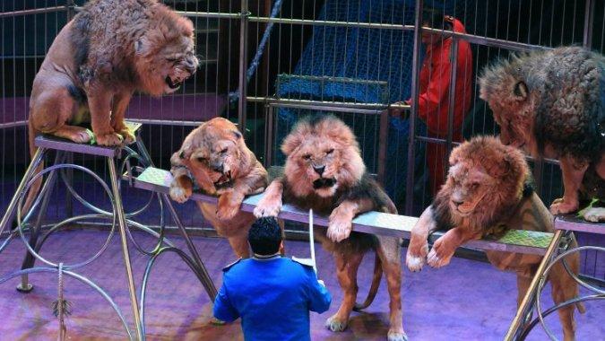 В Эстонском цирке больше не увидишь диких животных