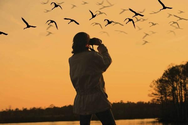 В Пермском крае открылся первый в регионе центр наблюдения за птицами