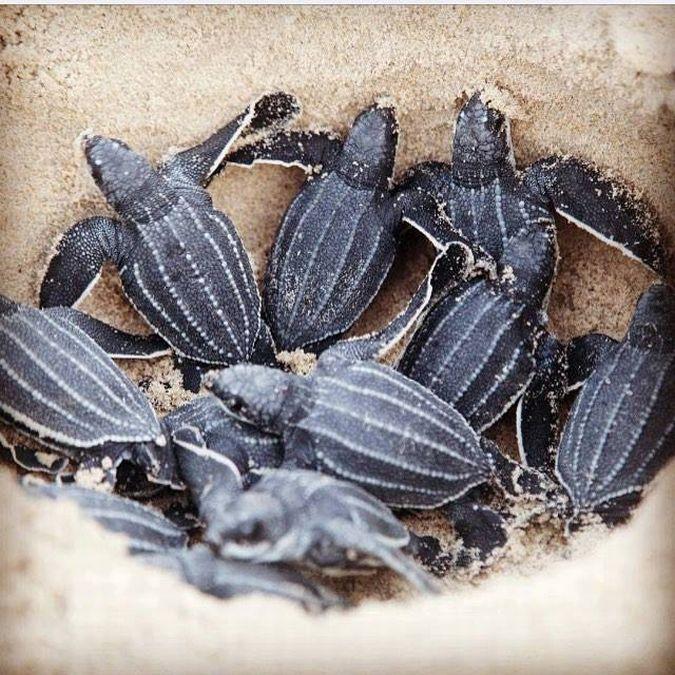 В ожидании черепах в Тринидаде делают бусы из бутылок