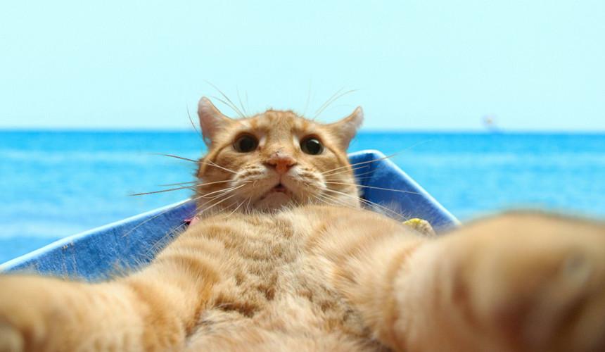 Дрейфующий кот, «лишний» пассажир и антистрессовое кафе
