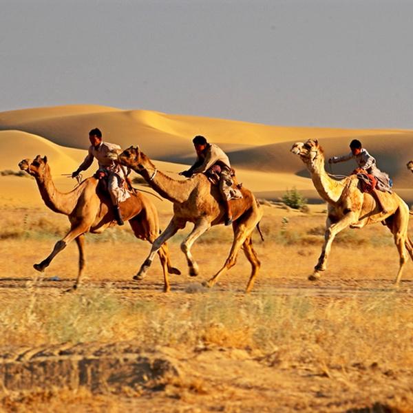 В Дубае состоялся ежегодный верблюжий марафон