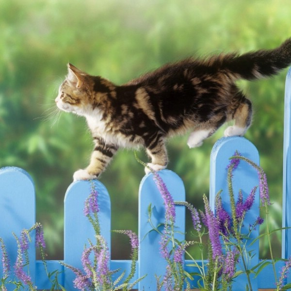 Деревня для кошек появится в Турции