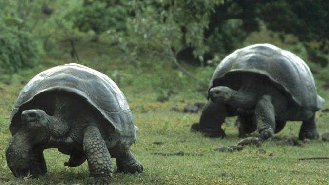 Больше всех страдают от туристов Черепашьи острова — исследование