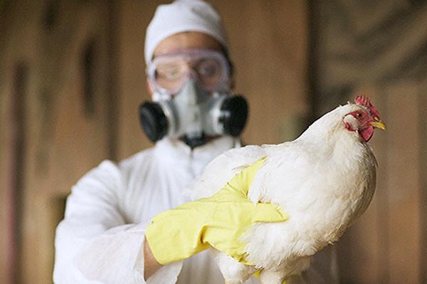 Роспотребнадзор предупредил туристов о птичьем гриппе в Европе